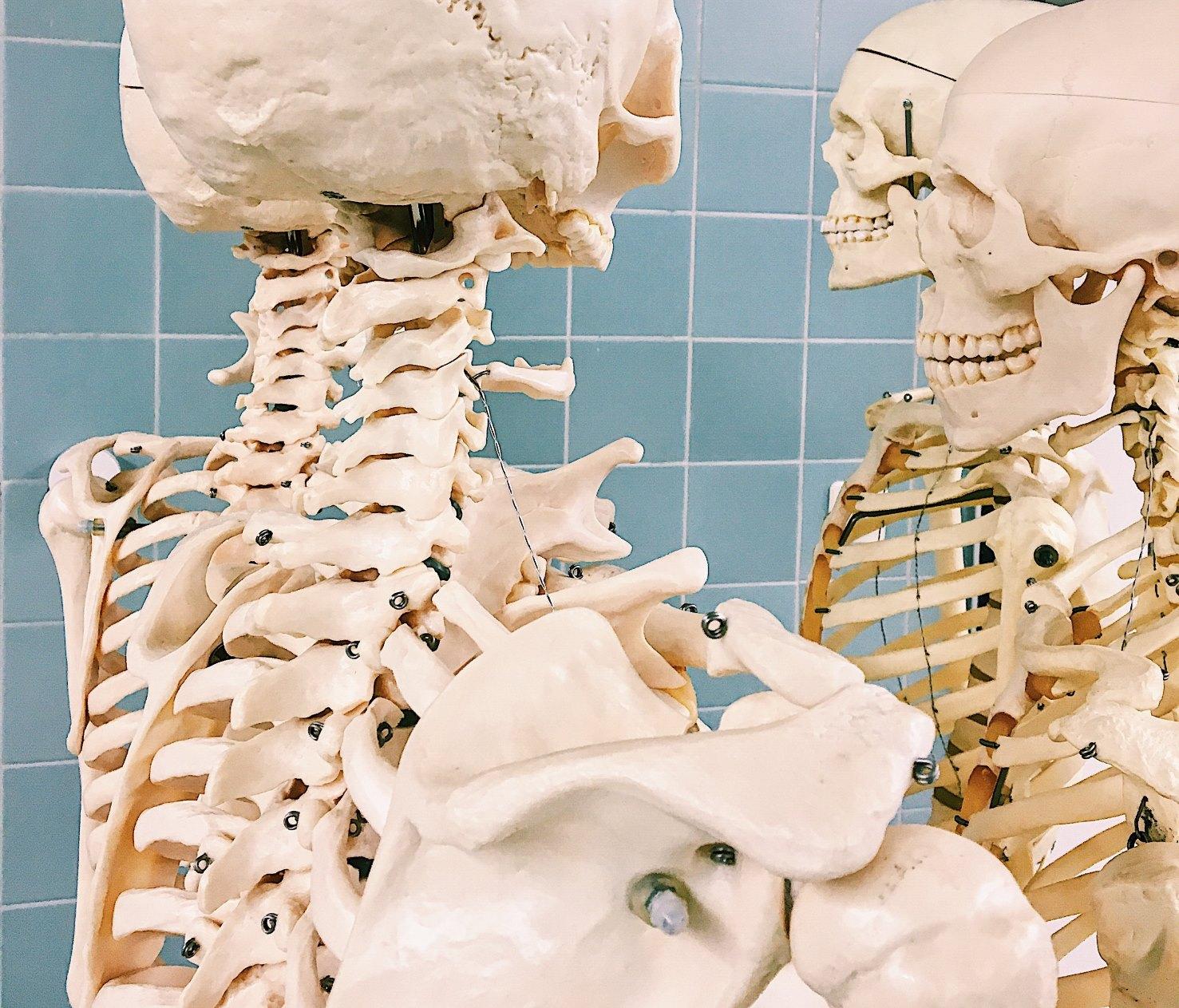 Gerippe im Anatomiesaal