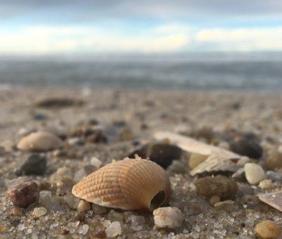 sylt strand muschel leichen
