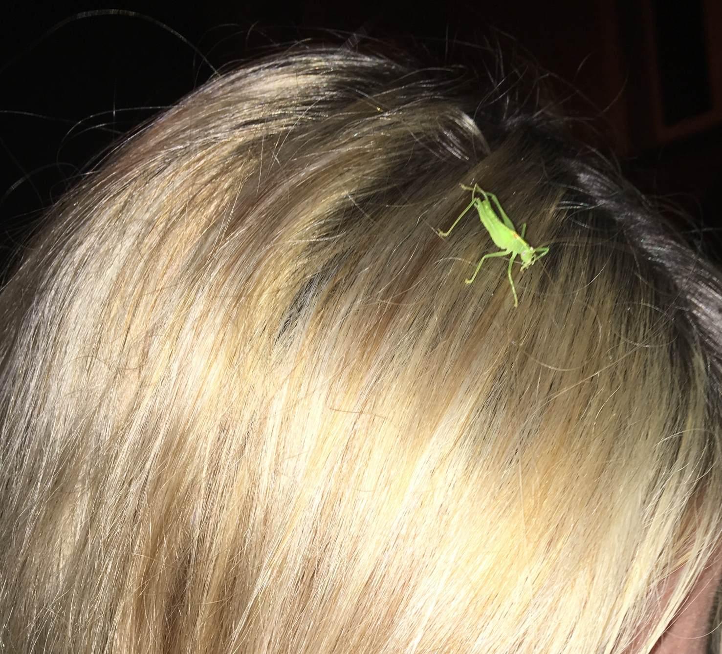 blonde strähnen und natuerlicher haarschmuck