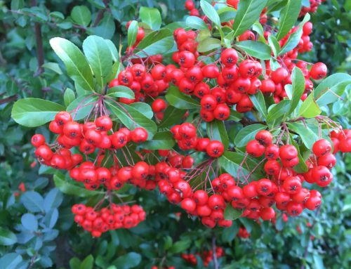 Beauty Neuheiten im Herbst – Teil 2