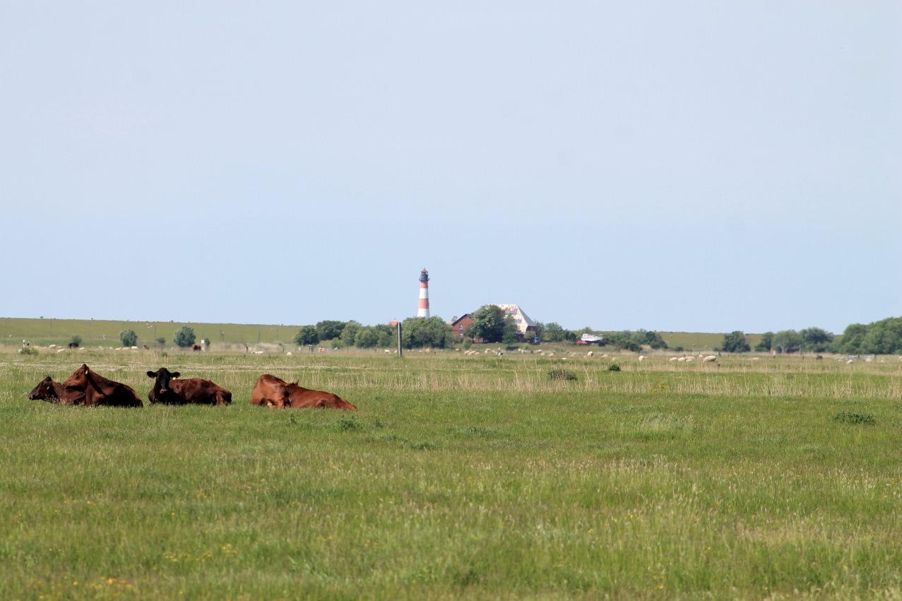 nordfriesland westerhever westerheversand leuchtturm