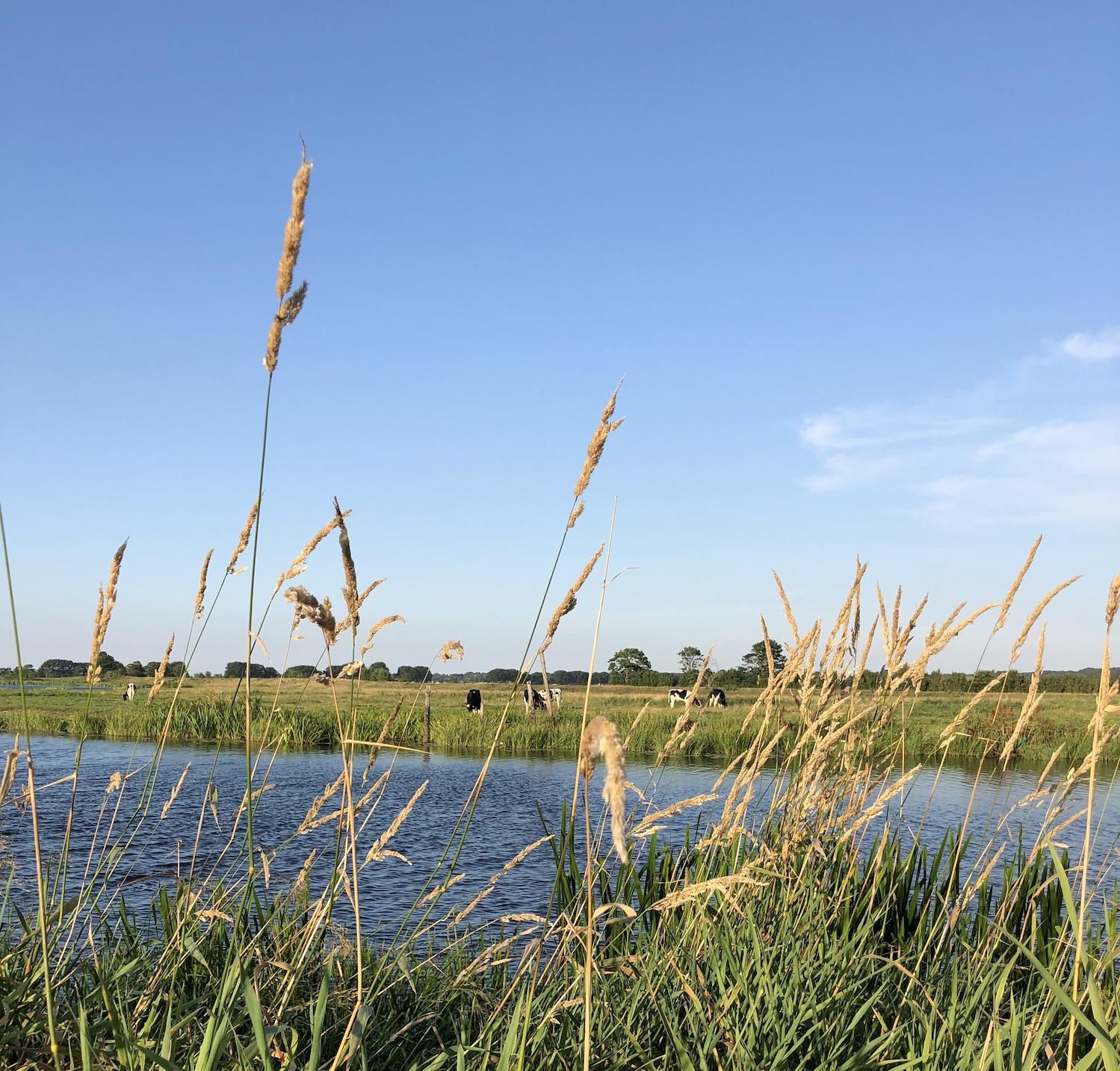 nordfriesland, sommer, treene