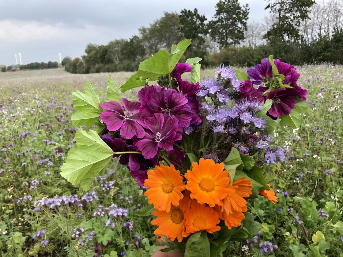 herbstlichenbienenweide lila violett orange